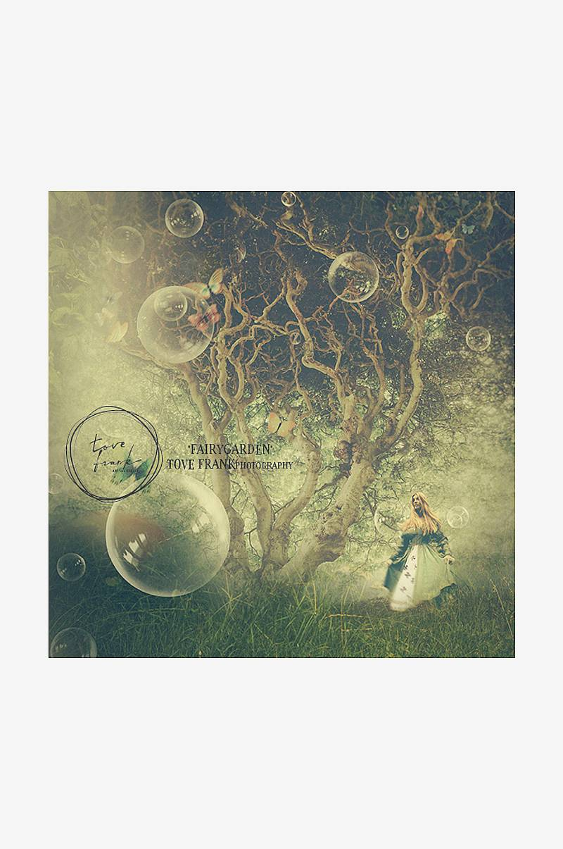 Poster KIDS Butterfly Tree 50x50 cm