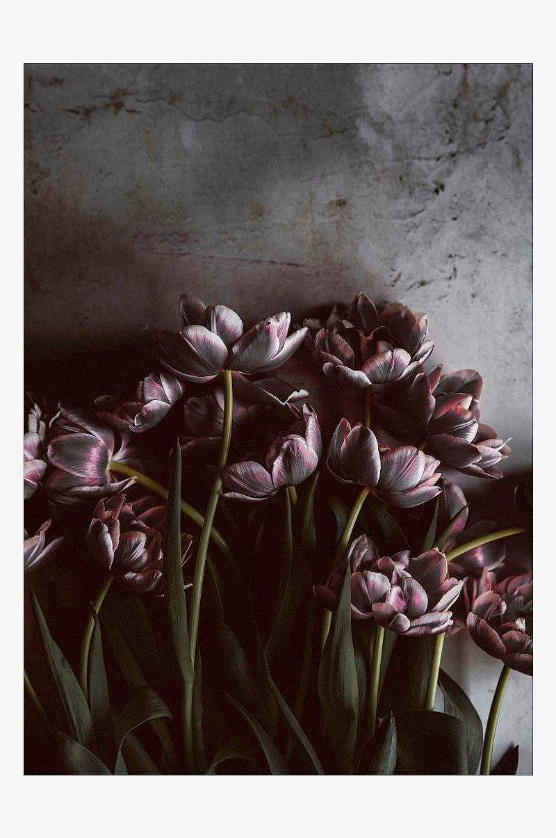 Plakat Dark tulips
