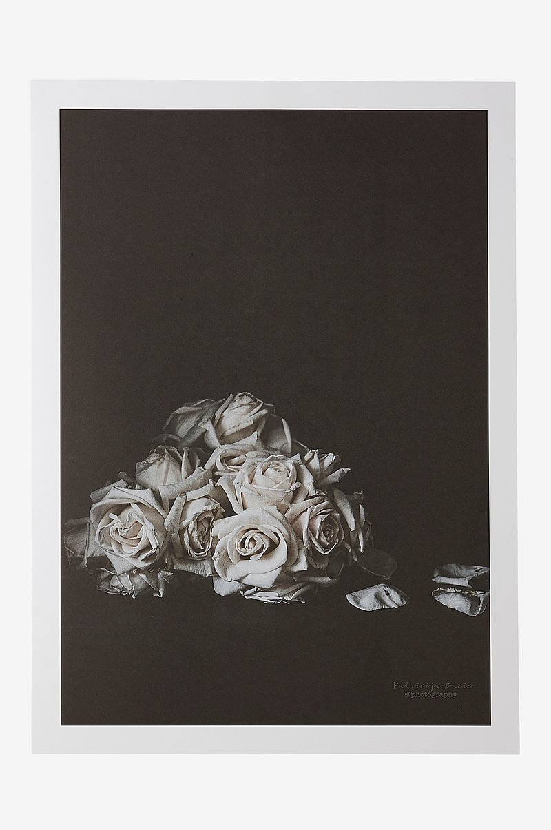 FADED ROSES poster 50x70 cm