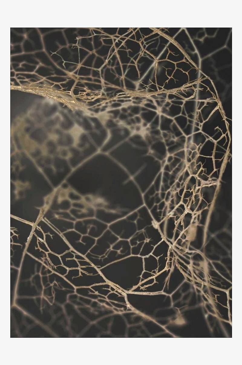 Poster Leaf skeleton dark
