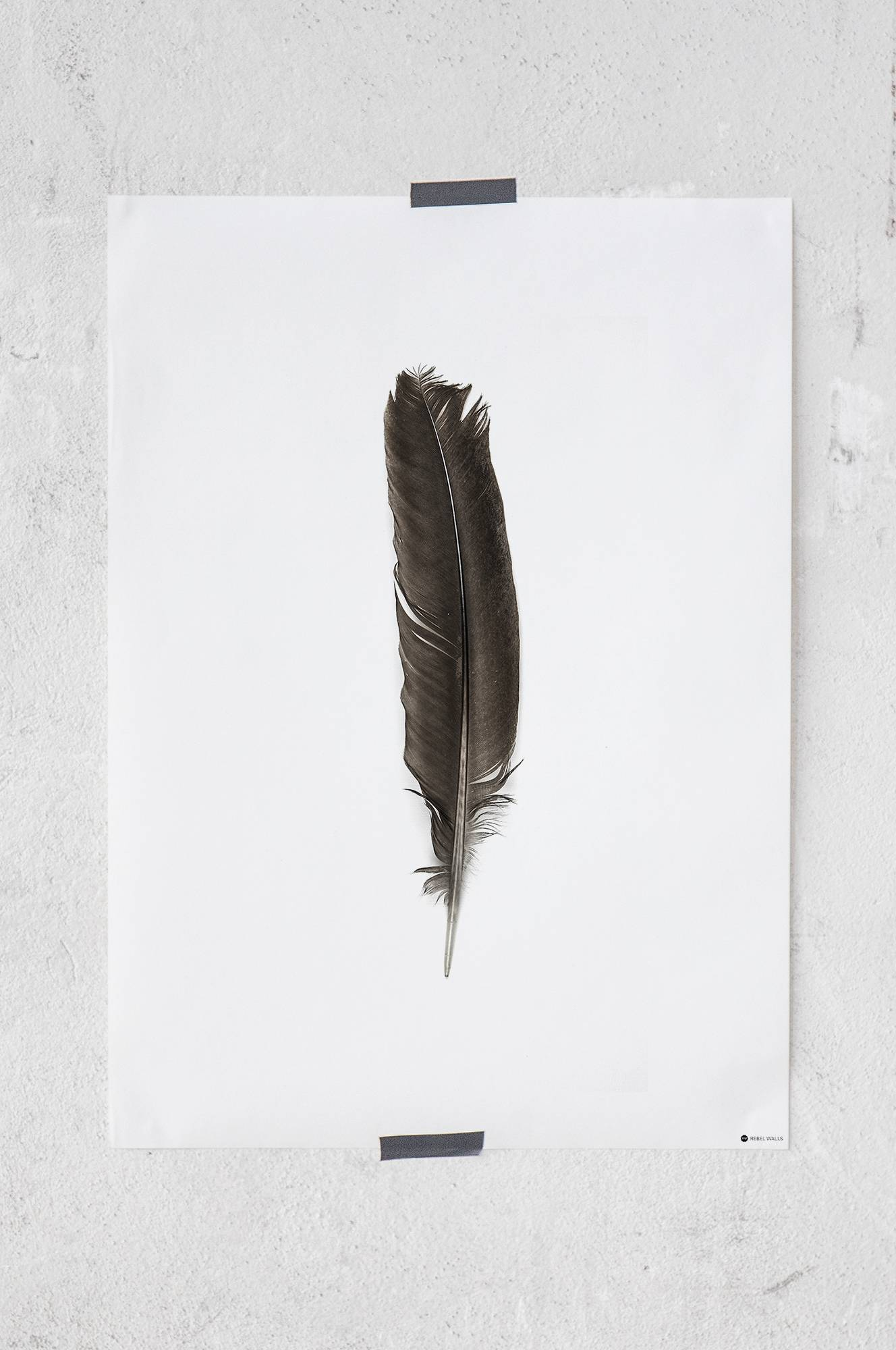 Lost Feather -juliste 50x70 cm