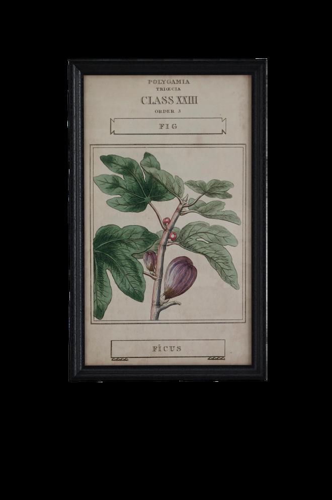 Bilde av Bilde Botany 40x65 cm