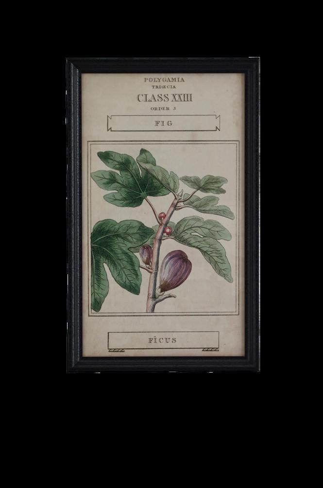 Tavla Botany 40×65 cm