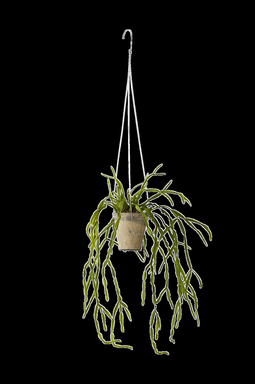 Flora-mehikasvi 58 cm.