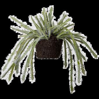 Flora-mehikasvi 15 cm.