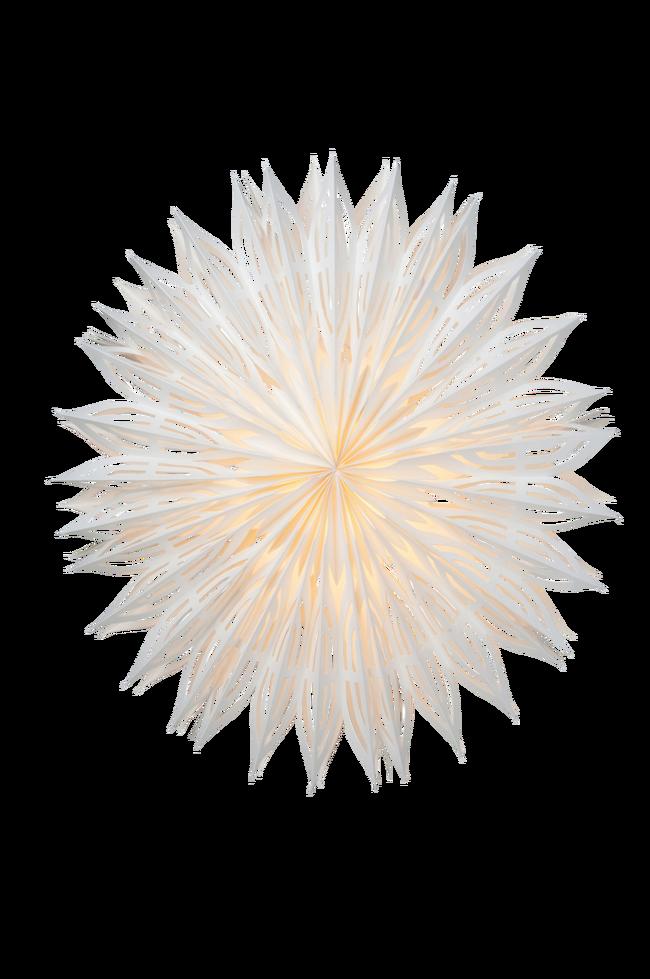 Bilde av Pappstjerne Is 60
