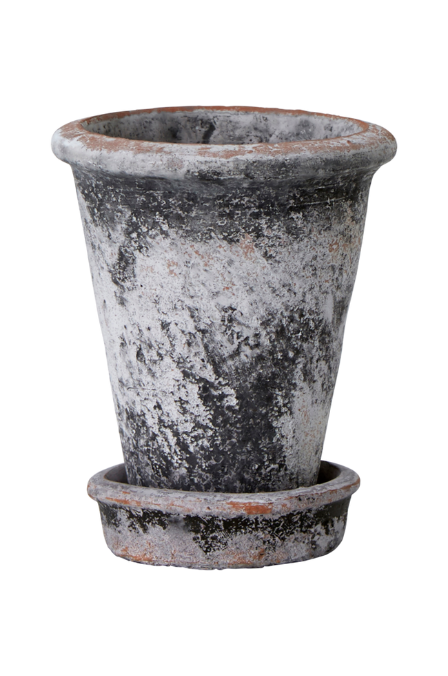 Bilde av Krukke Koriander høyde 15,5 cm med skål