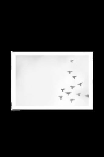 Copenhagen Doves -juliste 50x70 cm