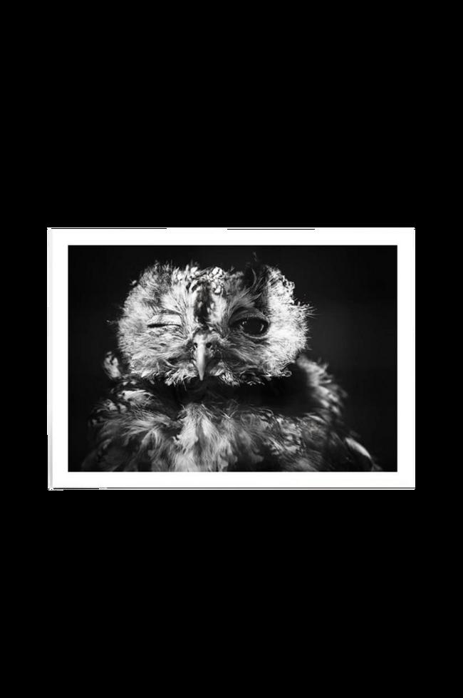 Bilde av Poster One Eye 50x70 cm