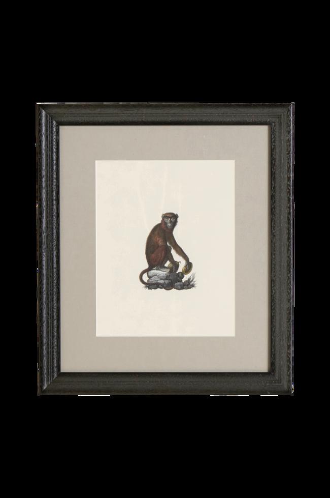Bilde av Bilde Monkey 1 35x40