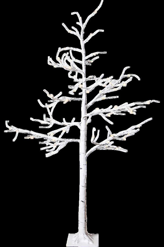 TrädBjörk150cm60Lww