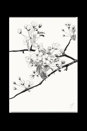 Cherry-juliste 50 x 70