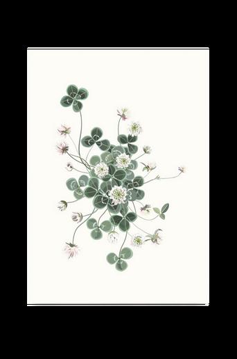 Lucky Clover -juliste 50 x 70