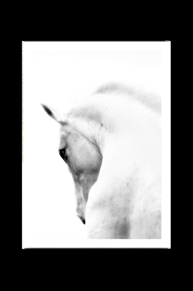 Bilde av Poster White Horse 50x70