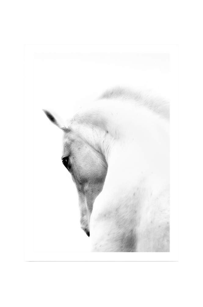Poster White Horse 50×70