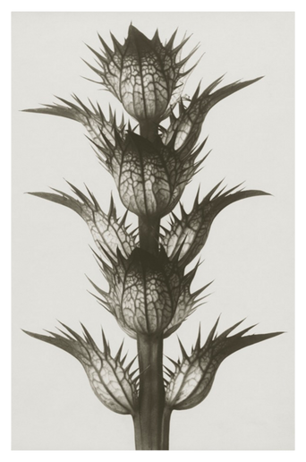 Acanthus mollis juliste 70x100 cm