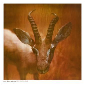 Gazella Dorcas juliste 50x50 cm