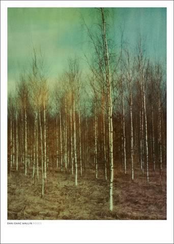 Birches juliste 50x70 cm