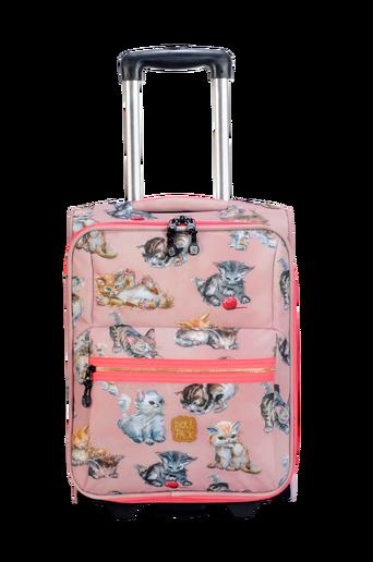 Trolley kittens rose