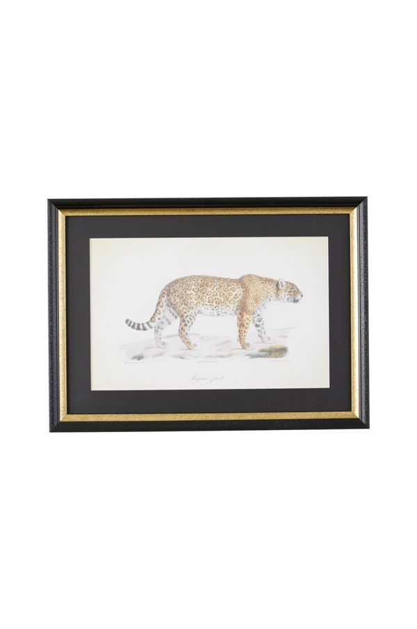 Bilde av Bilde Cuvier Jaguar - 30151