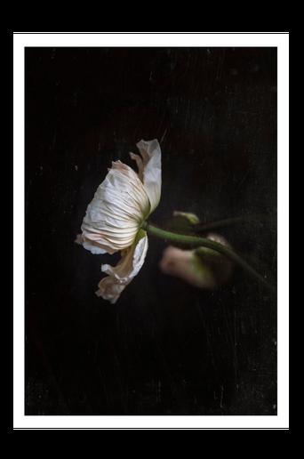 Juliste In dark stillness 70x100