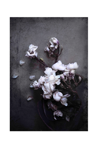 Juliste Isolde - Magnolia and roses print 70x100 cm