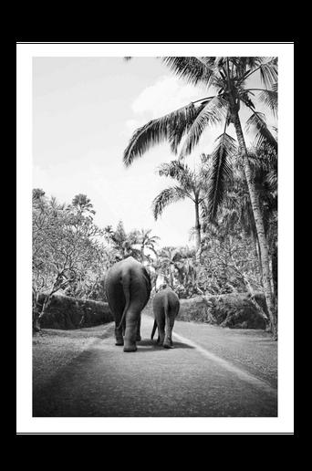 Juliste Elephant Walk 70x100