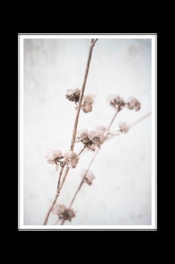 Juliste Dried autumn flowers poster 50x70
