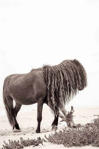 Juliste Horse with long mane 70x100
