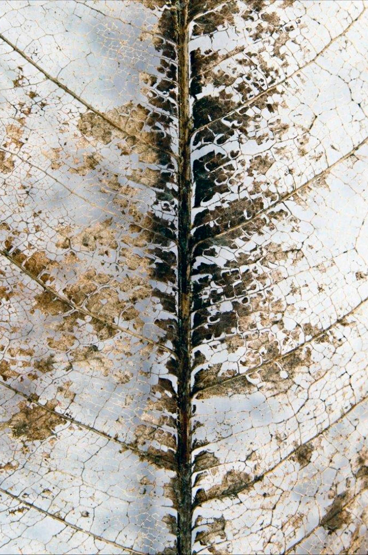 Malerifabrikken - Poster Close Up - Natur