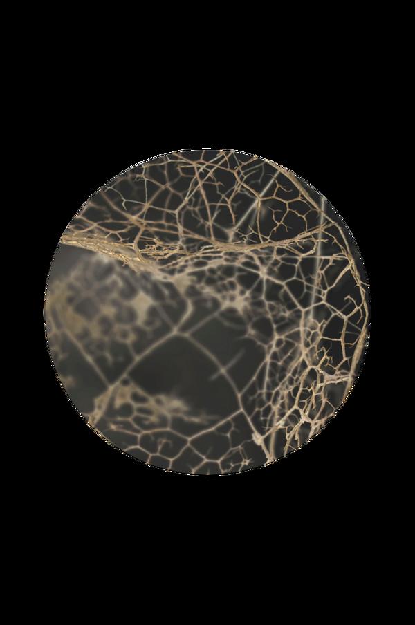 Bilde av Bilde Leaf skeleton dark - 30151