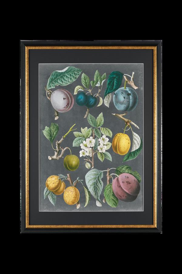Bilde av Bilde VS: Orchard Varieties 3 - 30151