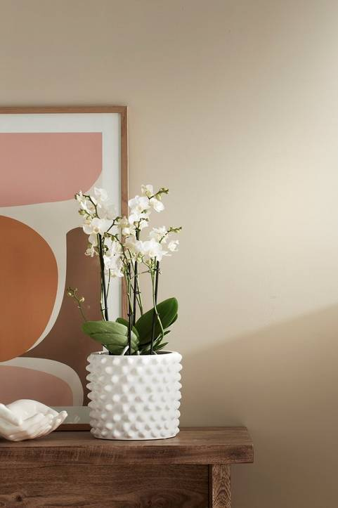 Orkidé 4-gren