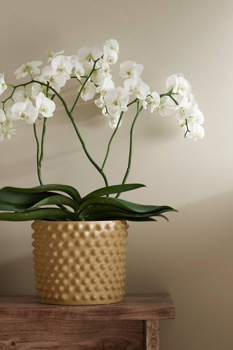 Orkidé 4-gren XL