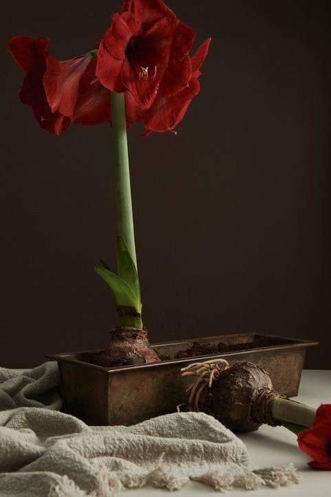 Blomsterlåda Carl längd 40 cm