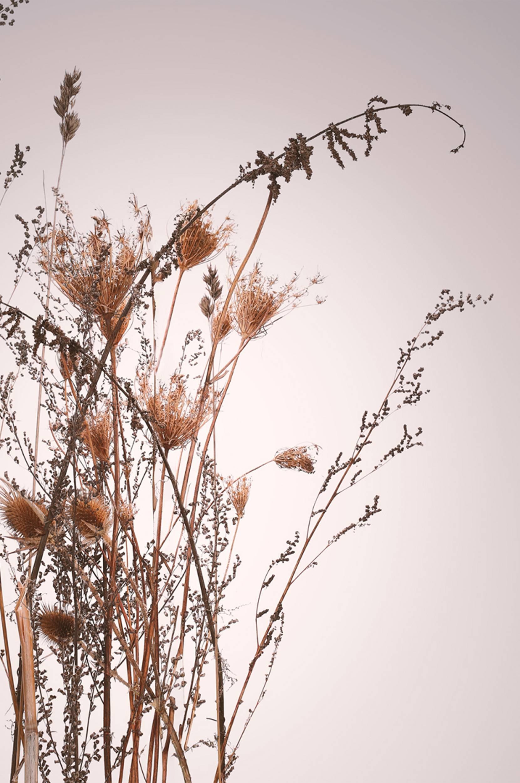 Malerifabrikken - Poster Everlasting - Natur
