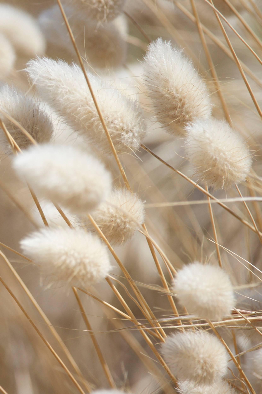 Malerifabrikken - Poster Mellow Grasses 8 - Natur
