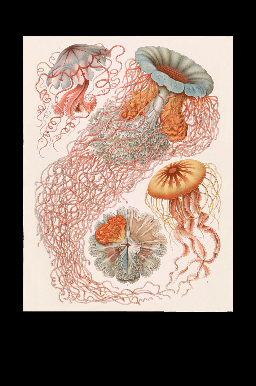Malerifabrikken - Poster Tafel 8 - Natur
