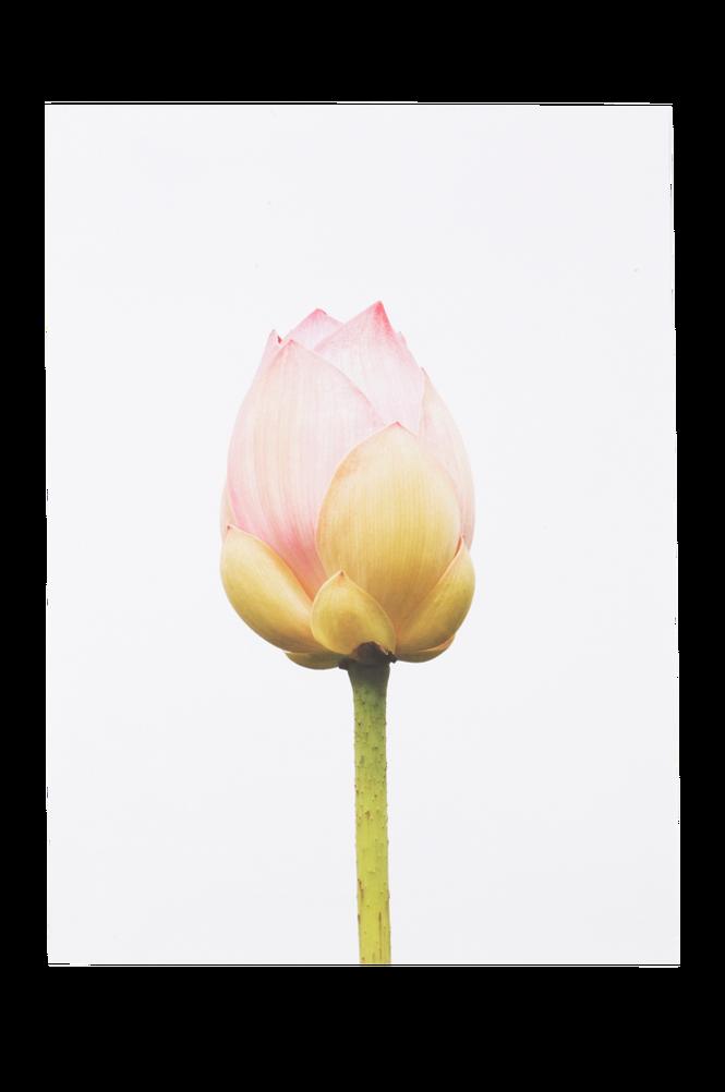 GROW poster 50×70 cm