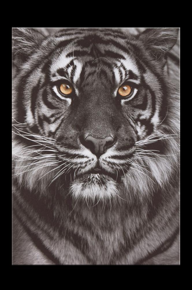 KATTEN poster 50×70 cm