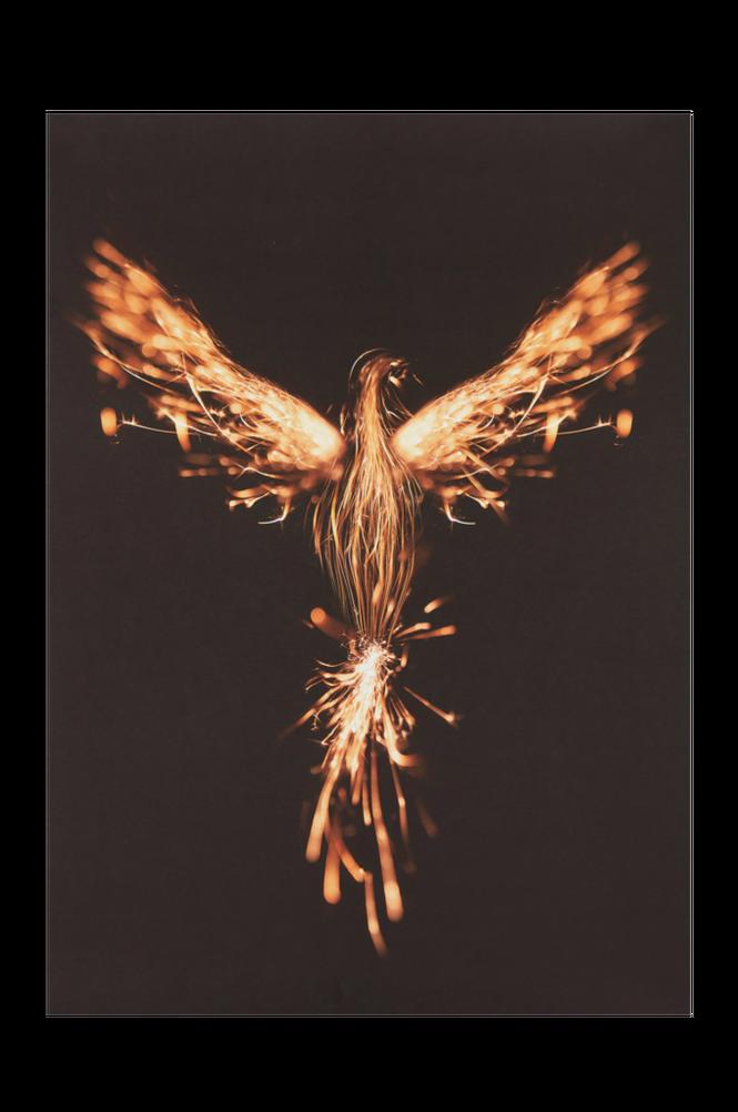 FENIX poster 50×70 cm