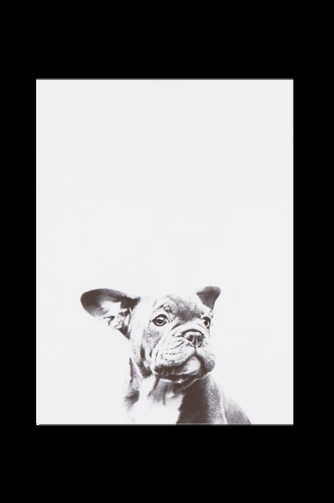 LITTLE DOG poster 30×40 cm
