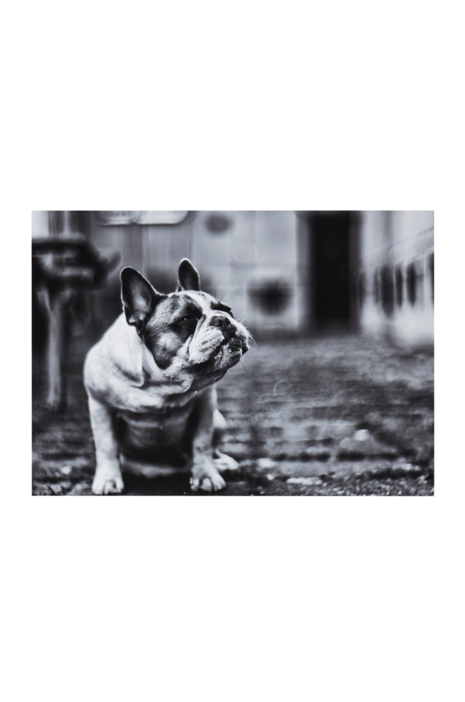 THE DOG poster 70×50 cm