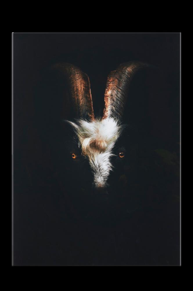 GRUFF poster 50×70 cm