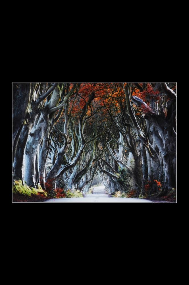 TREE AVENUE poster 70×50 cm