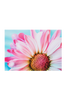 Bilde av RINGFLOWER poster 70x50 cm
