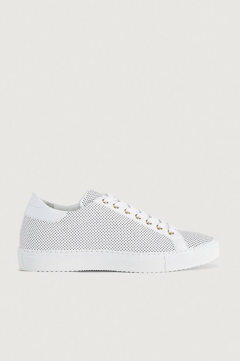 Wingfield Perforated